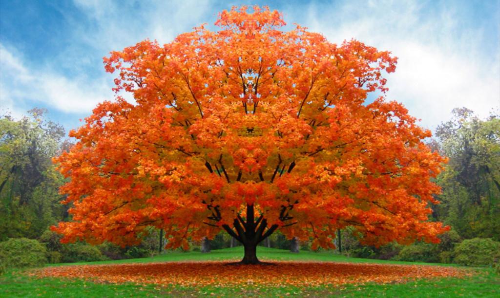 albero_autunno_Platinum-NLP-practitioner1