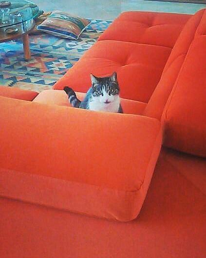 Tessuto resistente ai gatti archivi lineatre arredamenti alberobello - Gatto divano microfibra ...